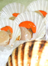 Fresh Fish Export, Half Shell Scallops